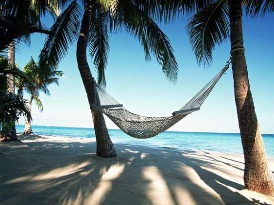 Hammock on coconut trees