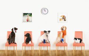 Pet Insurance Hospital Visit